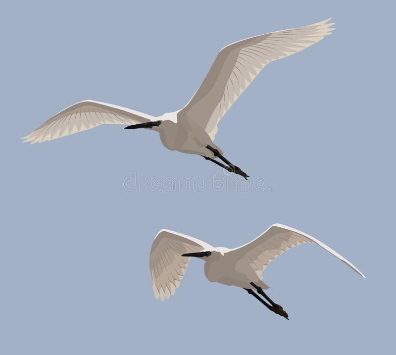 Маленькие Egrets иллюстрация вектора