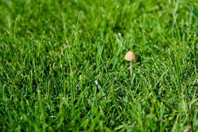 Маленький гриб стоковая фотография rf