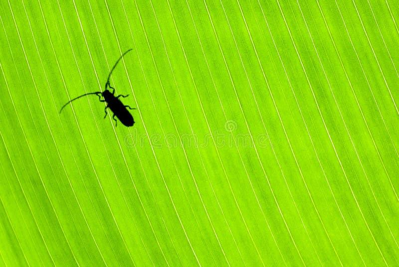 Маленький жук на зеленой предпосылке стоковая фотография