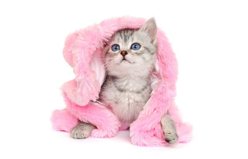 Маленький котенок в розовой меховой шыбе на белизне стоковые фото
