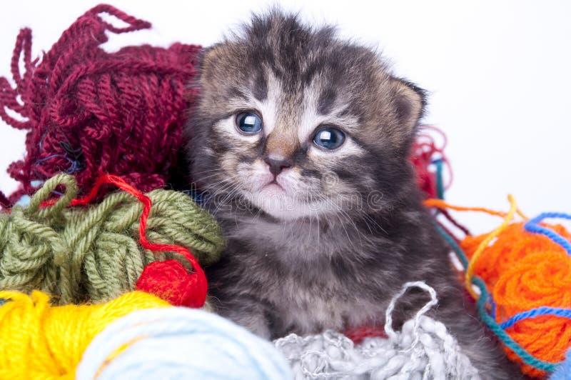 Маленький котенок в шариках шерстей стоковые фотографии rf