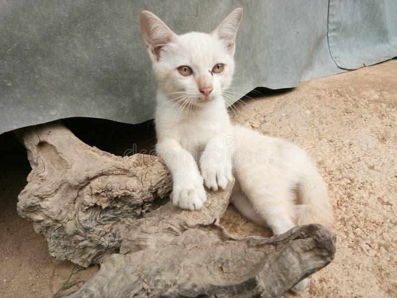 Маленький кот и пни стоковая фотография