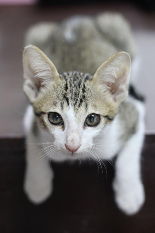 Маленький кот сидя вниз стоковые фотографии rf
