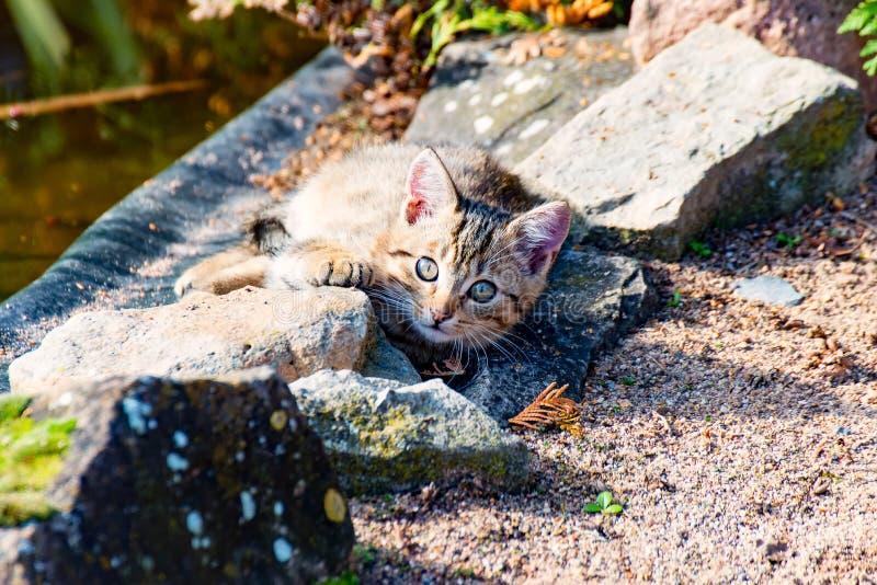 Download Маленький кот 1 стоковое изображение. изображение насчитывающей лужайка - 81808815