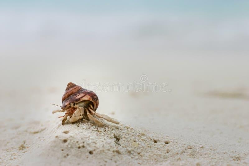 Маленький краб затворницы на пляже с белым песком на Мальдивах стоковая фотография rf