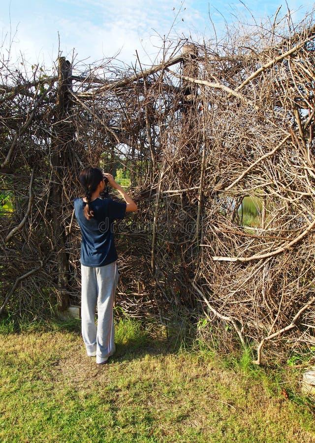 Birdwatching деятельность, малыш на мостовье природы стоковые фото