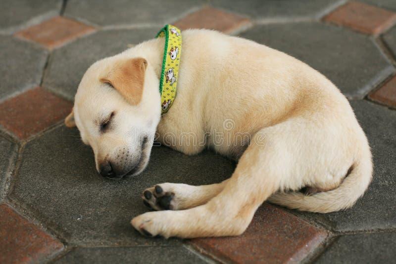 маленький спать собаки щенка стоковое изображение