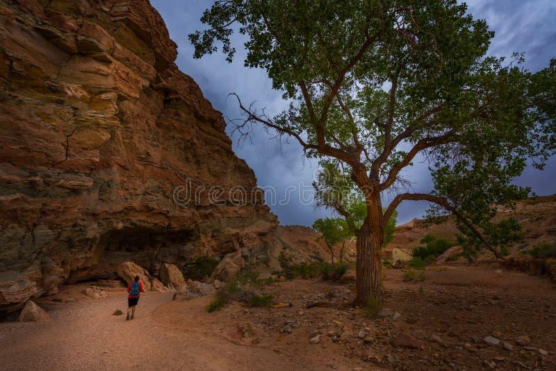 Маленький hiker каньона дикой лошади на entrace стоковое изображение