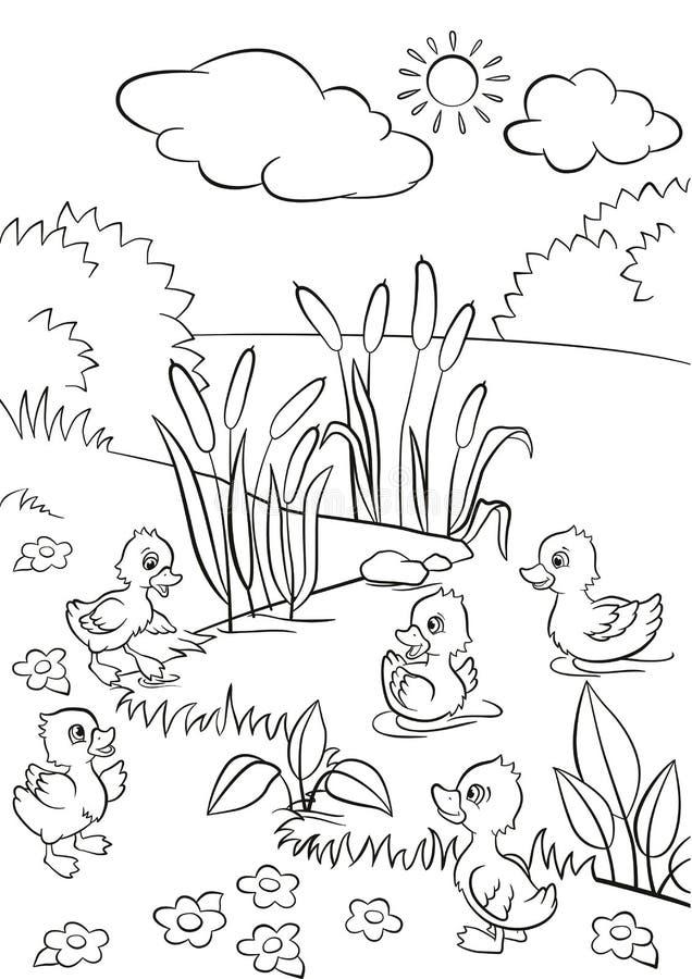 5 маленьких милых утят плавают на озере и стоят на траве иллюстрация вектора