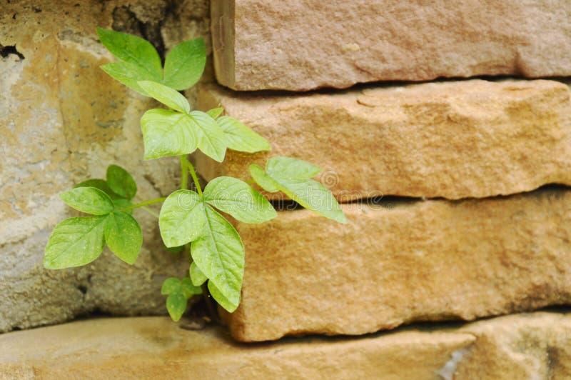 Маленькое выращивание растения от отверстия в великолепном столбце кирпича стоковые фото