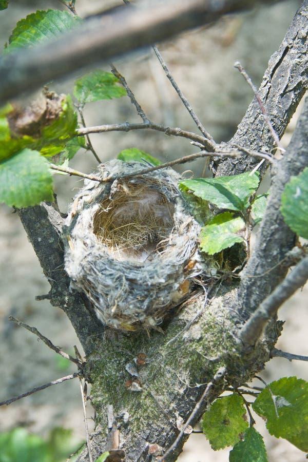 Маленькое гнездо на ветви стоковая фотография