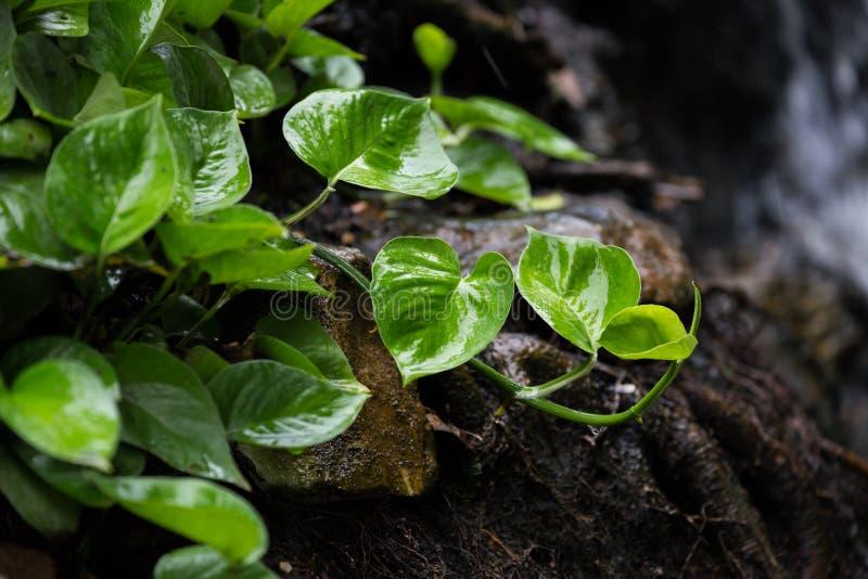Малое дерево растет на влажной почве стоковые изображения rf