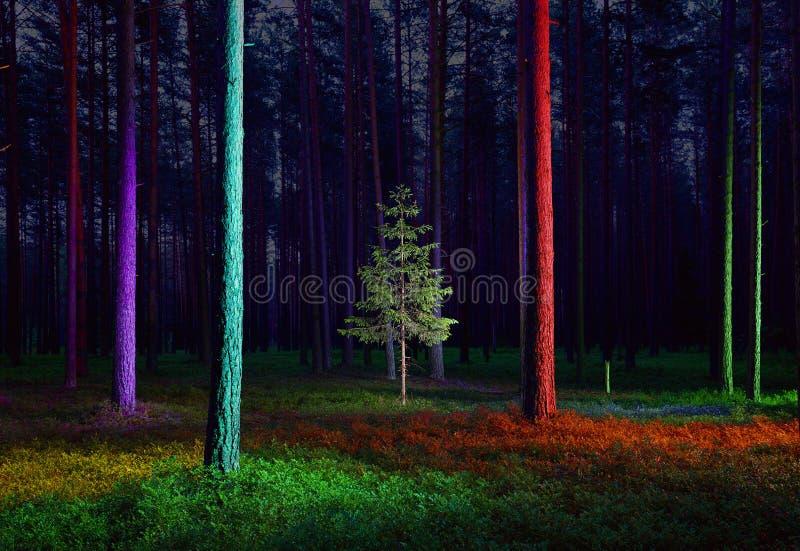 Малое елевое дерево в загоренном лесе стоковое изображение