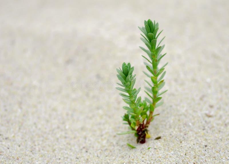 Малое зеленое растение растя на песке стоковое фото