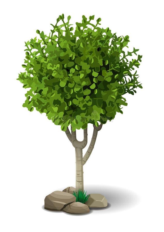 Малое лиственное дерево иллюстрация вектора