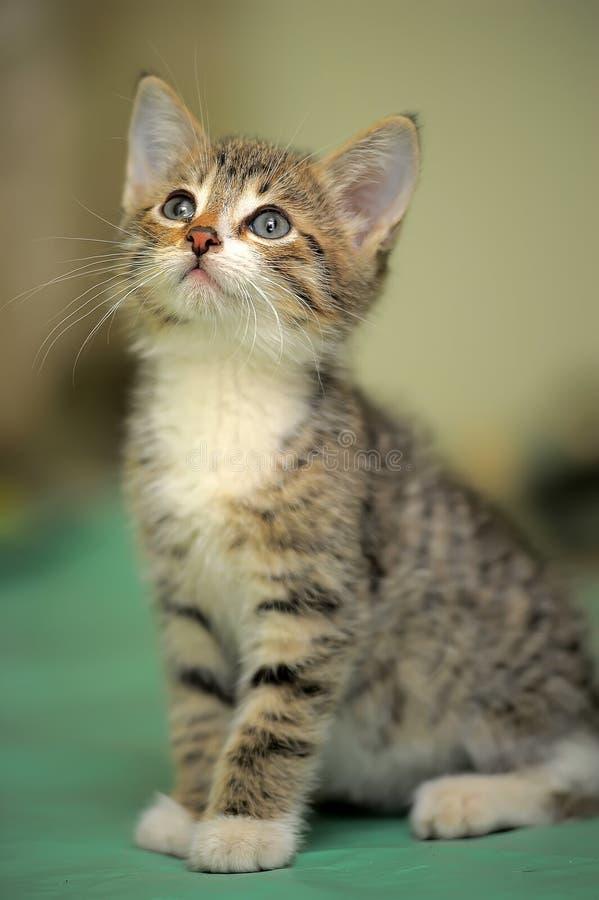 Малое striped усаживание котенка стоковое фото rf