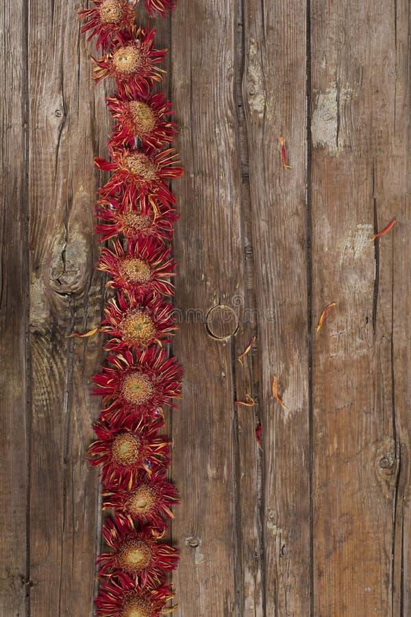 Малые высушенные цветки стоковые фото