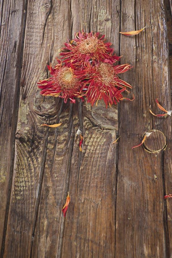 Малые высушенные цветки стоковое фото rf