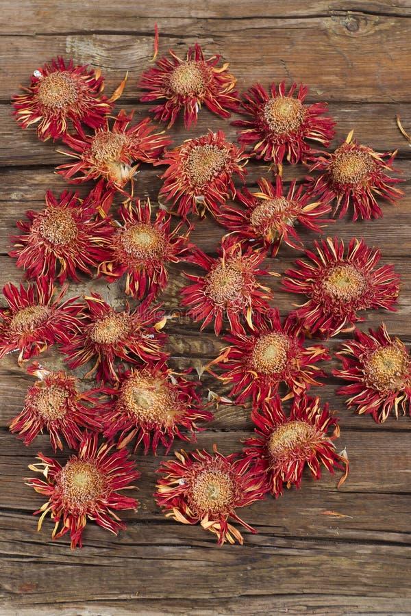 Малые высушенные цветки стоковое фото
