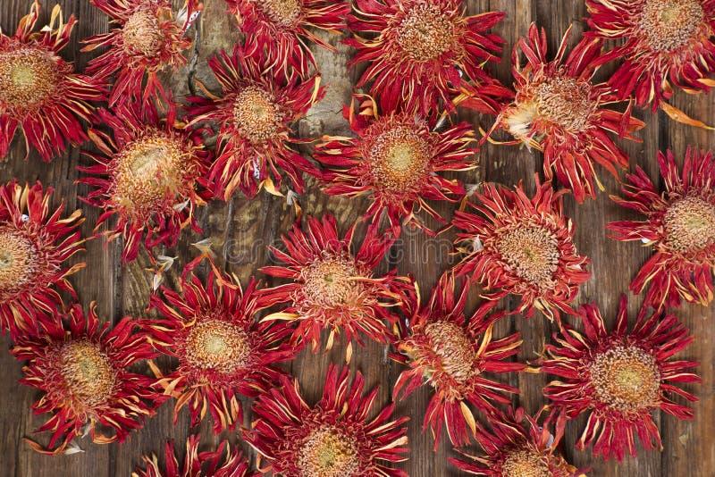 Малые высушенные цветки стоковое изображение