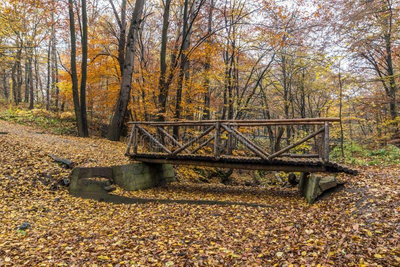 Малые деревья моста и осени, гора Vitosha, Болгария стоковая фотография