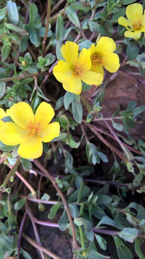 Малые желтые цветки стоковая фотография