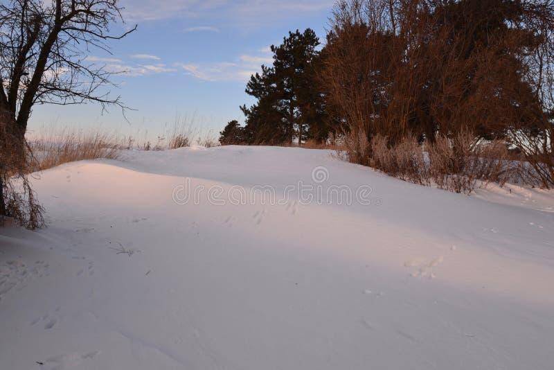 Малые животные следы в снеге кренят после шторма снега стоковые фотографии rf