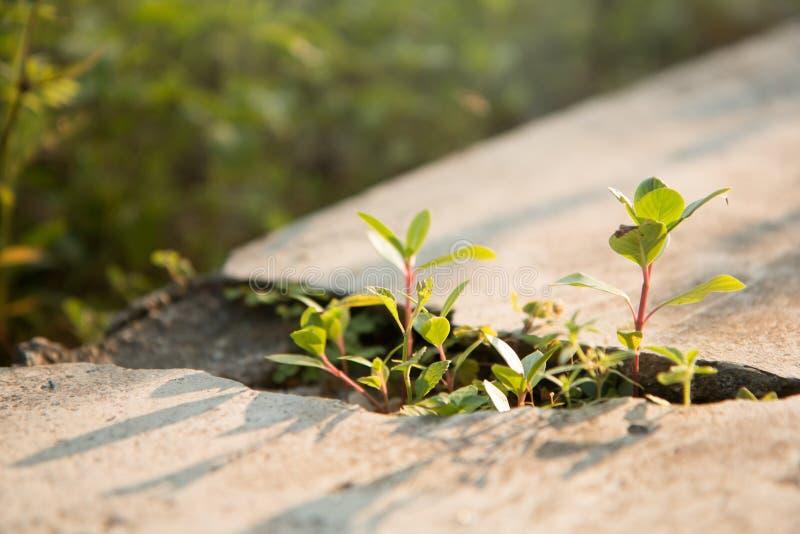 Малые зеленые деревья растут пол цемента отказов стоковая фотография