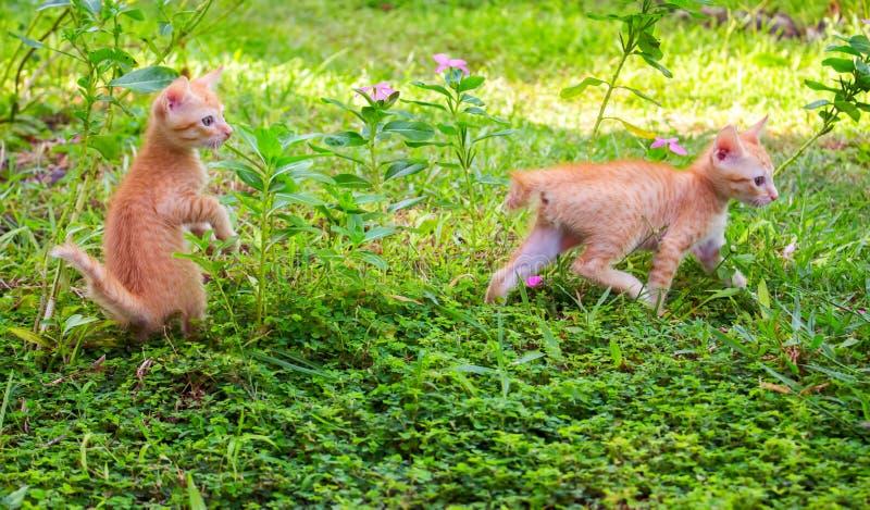 Малые котята играя в солнечном саде Коты первого раза внешние стоковые фотографии rf