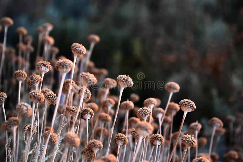 Малые милые цветки стоковые изображения rf