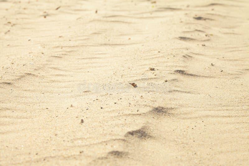 Малые песчанные дюны на пляже стоковое изображение rf
