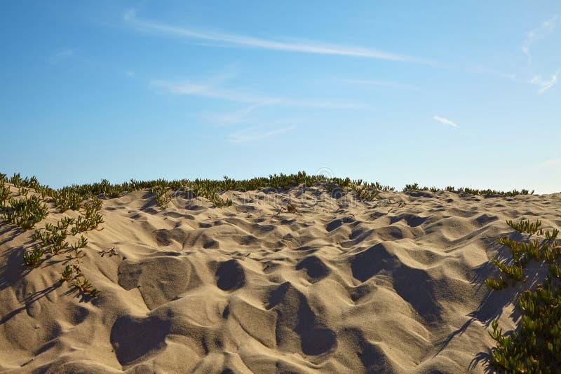 Малые песчанные дюны на пляже стоковые изображения rf