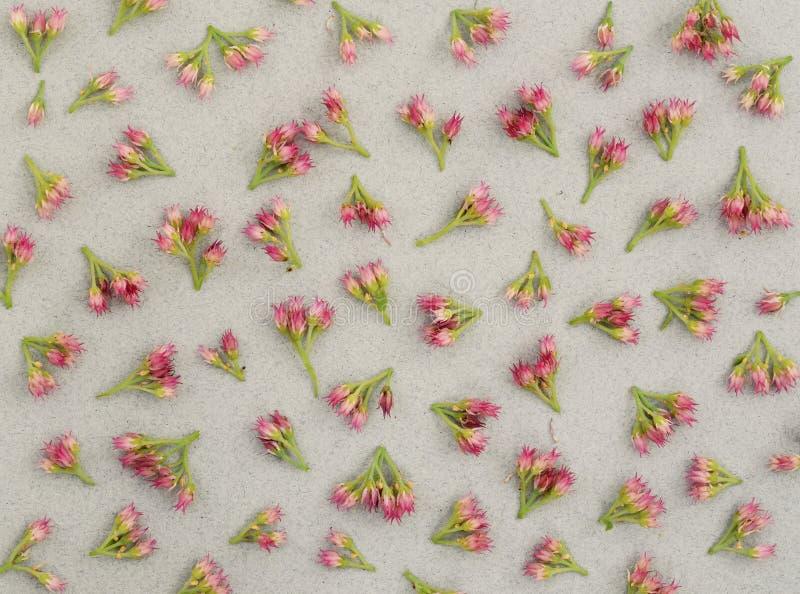 Малые розовые цветки на серой бумаге стоковые фото