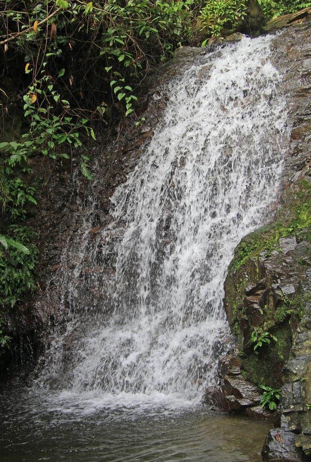 Малый водопад почти Bukit Lawang стоковые изображения rf