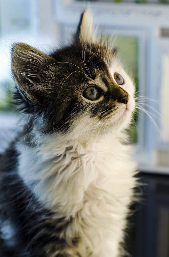 Малый и пушистый котенок стоковая фотография