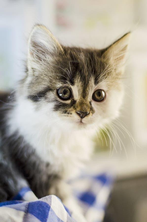 Малый и пушистый котенок стоковое фото