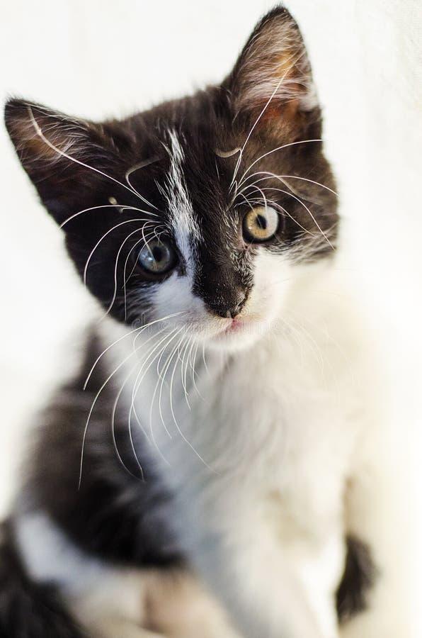 Малый и пушистый котенок стоковое изображение