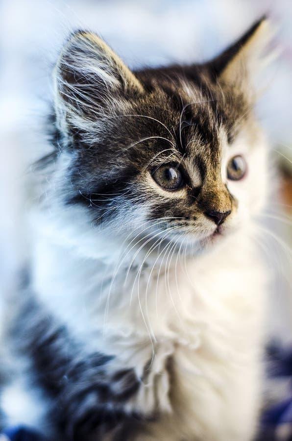 Малый и пушистый котенок стоковые фотографии rf