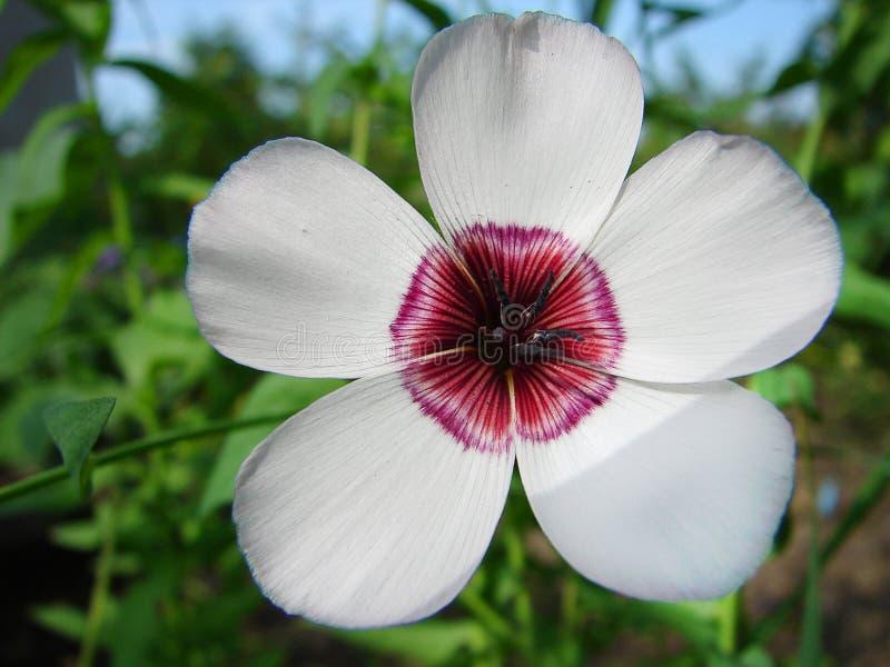 Фото цветка с красным центром