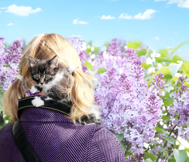 Малый котенок в безопасности стоковая фотография rf