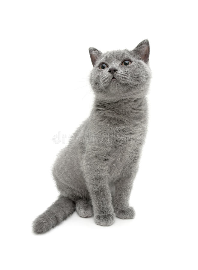 Малый котенок сидит на белой предпосылке стоковые фото