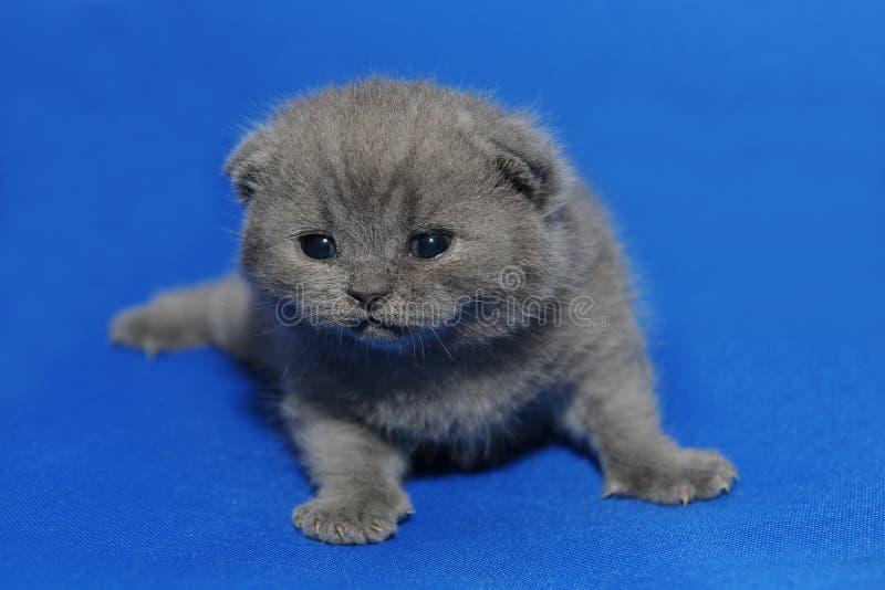 Малый котенок с заново раскрытыми глазами стоковые изображения rf