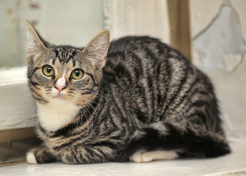 Малый кот tabby стоковое изображение rf