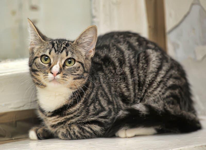 Малый кот tabby стоковые фото