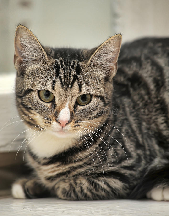 Малый кот tabby стоковые изображения rf
