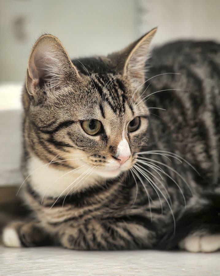 Малый кот tabby стоковые фотографии rf