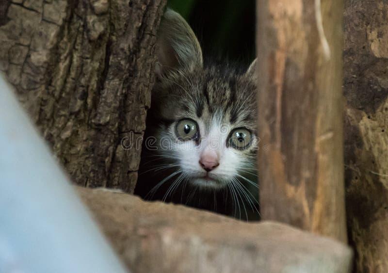 Малый милый вспугнутый прятать котенка стоковая фотография rf