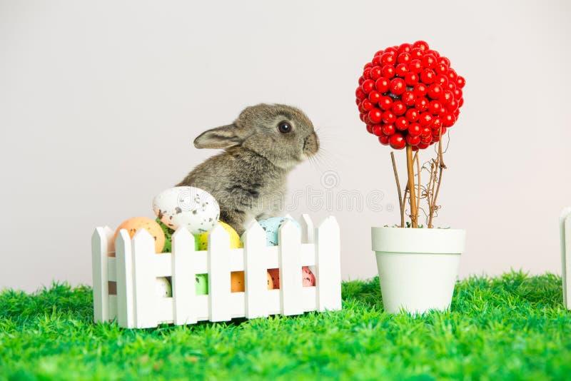 Малый милый зайчик с пасхальными яйцами стоковое фото rf