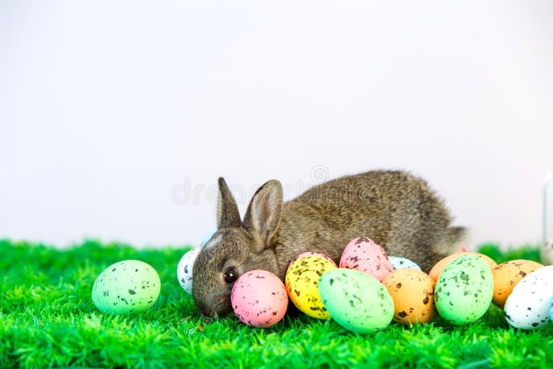 Малый милый зайчик с пасхальными яйцами стоковая фотография