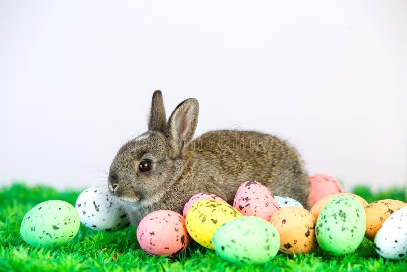 Малый милый зайчик с пасхальными яйцами стоковые изображения